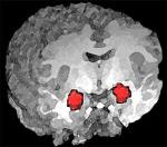Scientists Discover Anti-Anxiety Circuit in Brain Region Considered the Seat of Fear